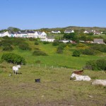 Connemara Ponies on the Connemara Loop