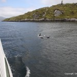 Dolphins playing in Killary Fjord